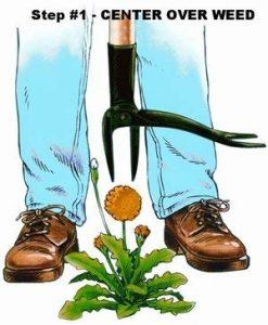 Weed Puller Illustration